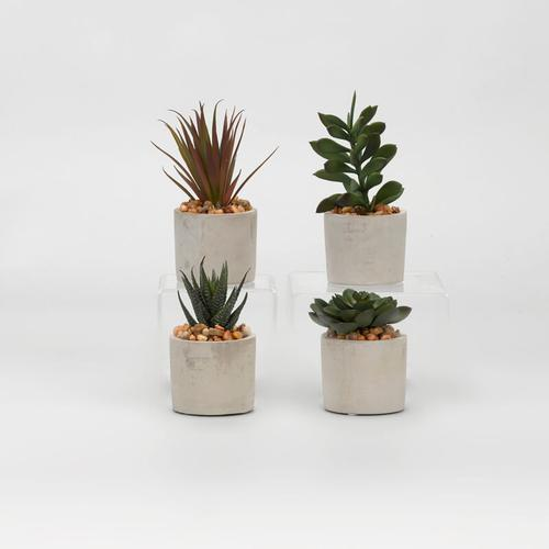 Assorted Succulents in Mini Cement Cylinders