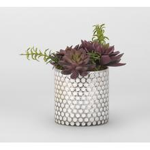 Red/Green Echeveria in Silver/White Glass Cylinder