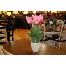 See Details - Pink Parot Tulips