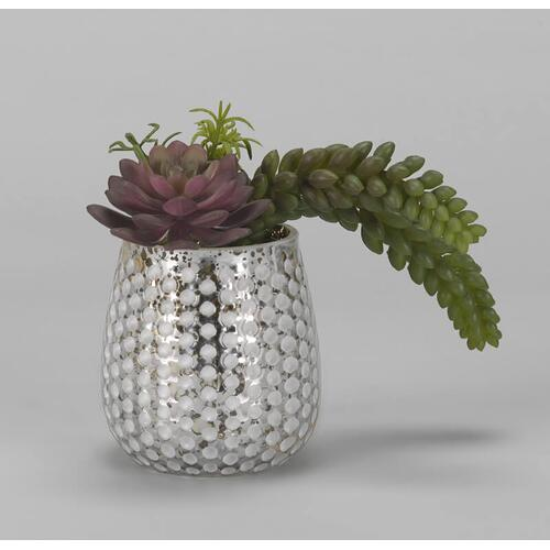 Red/Green Echeveria & Donkey Tail in Silver/White Glass Cup