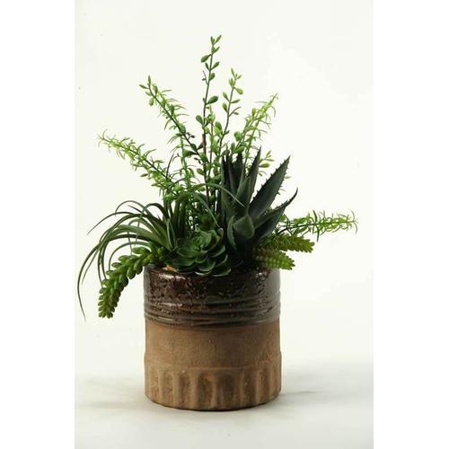 Aloe, Tillandsia and Echeveria in Round Ceramic Planter