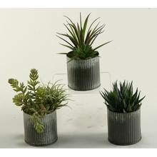 Aloe, Succulents and Easter Grass in Zinc Vases