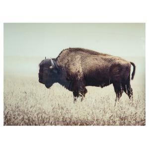 Brutus Buffalo Wall Art