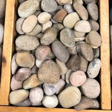 Mexican Beach Pebbles Buff Small