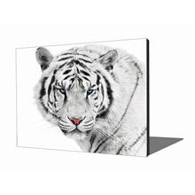 Wall Art - White Tiger in the Snow