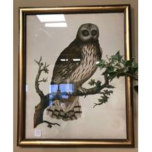See Details - Owl Mirror